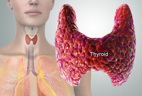 Your Beautiful and Important Thyroid